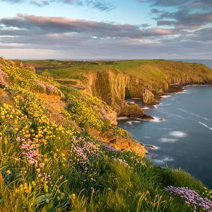 The Old Head of Kinsale, Beara Peninsula, County Cork, Ireland